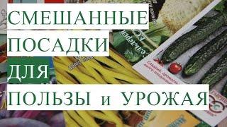 видео Базилик, Дачные вопросы