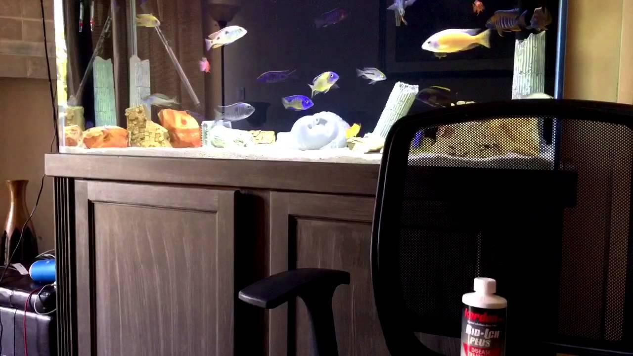 how to get rid of tannins in aquarium