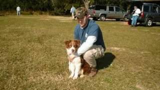 Search & Rescue K9 Dog Teams