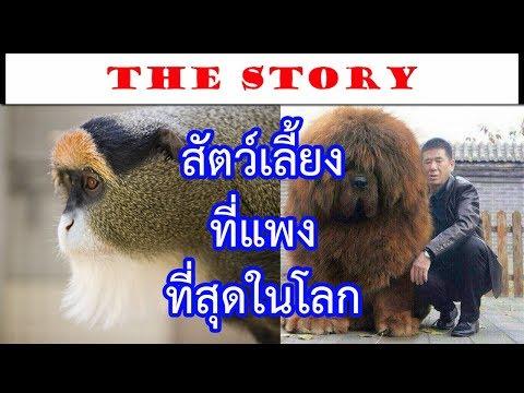 สุดยอด 10 สัตว์เลี้ยงที่มีราคาแพงเว่อร์ที่สุดในโลก | The Story เรื่องเล่า เล่าเรื่อง