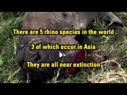 Talking Rhino to Asia - English Subtitles