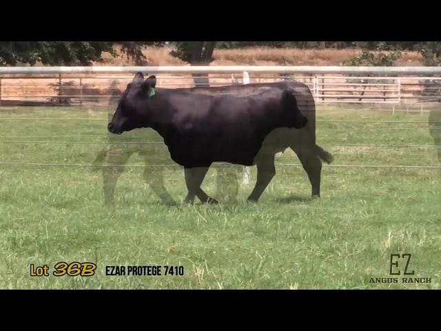 EZ Angus Ranch Lot 36B