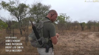 safariLIVE - Sunrise Safari - Nov. 08, 2017 thumbnail
