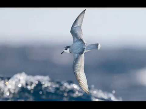 Chemical clue to why seabirds eat plastic
