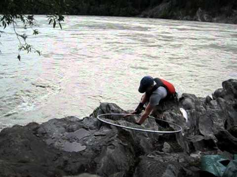 Dipnetting In Chitina Alaska 2010 Youtube