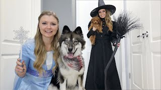 wicked-witch-uses-pretend-play-magic-on-kakoa-the-puppy