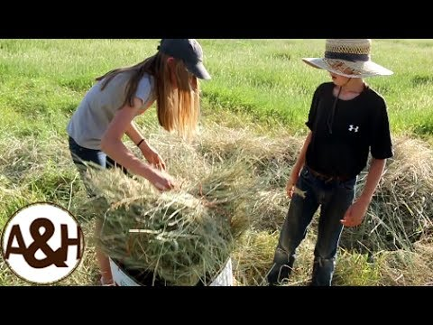 Baling HAY bales without machinery!