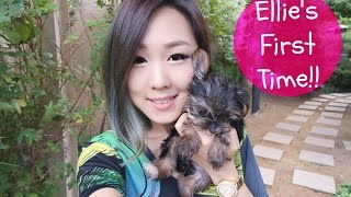Meejmuse In Korea: Ellie's First Time Outside!! ☀