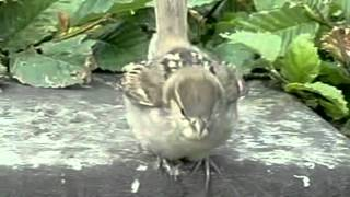 Птицы! Их движение прекрасно если замедлить съёмку...