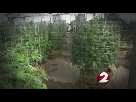 Plant to patient: how medical marijuana will work in Ohio