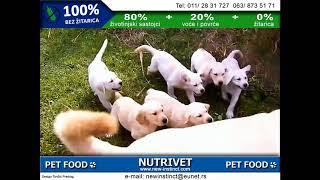 Funny dogs & NUTRIVET zdrava hrana za pse i mačke (9)