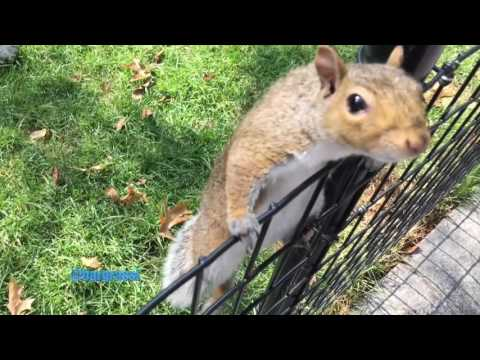 Squirrels in Madison Square Park - NYC