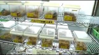 『昆虫探偵 ヨシダヨシミ』4月3日(土)より、新宿Ks cinema、シネ・リ...