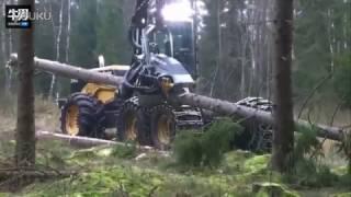 Убийца леса