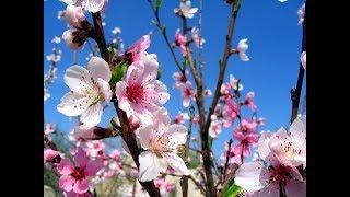 Чем порадует вас апрель ?