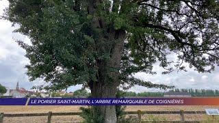 Yvelines | Le poirier Saint-Martin, l'arbre remarquable de Coignières