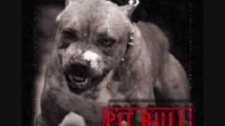 bushido-Pitbull