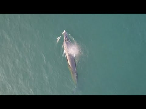 Splendid view: Group of whales live in one of China's offshore regions