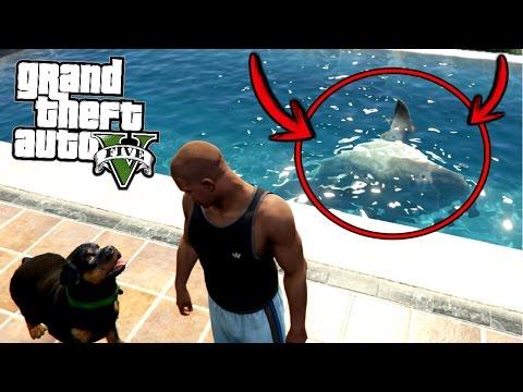¿Qué pasa si metes a Chop con un tiburón a la alberca? - GTA 5