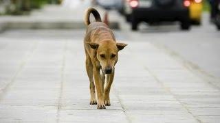 Что делать, если ваша собака потерялась