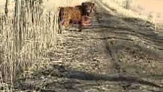 dziki zwierz za pobliskim gajem ruczajem,  z motoru