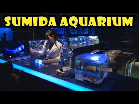 Sumida Aquarium at the Tokyo Skytree