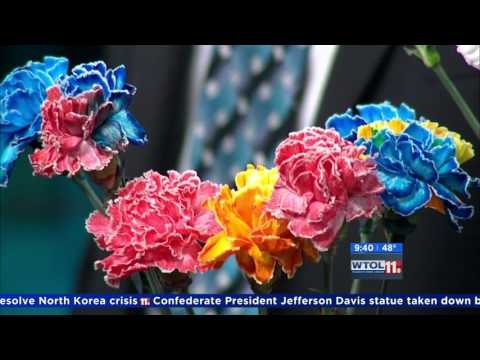 Color Carnations using science