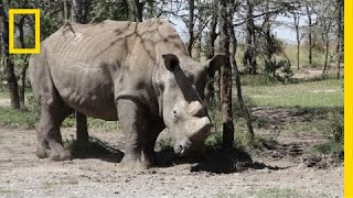 fighting rhino poaching with guns drones and dogs   short film showcase