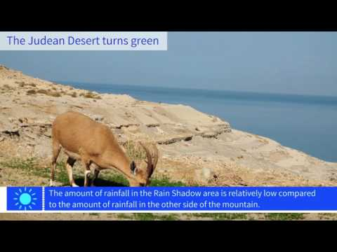 The Judean Desert Turns Green
