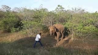 Gambar cover Elephant attack kataragama