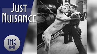Just Nuisance: The Long Awaited Dog Episode