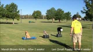 Oklahoma Dog Trainers - Obedience With 3 Dogs