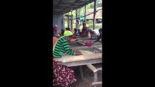 Coffee Workers Singing - Yirga Cheffe, Ethiopia