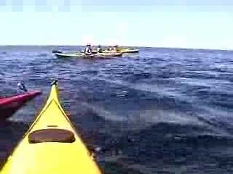 Whale encounter kayak