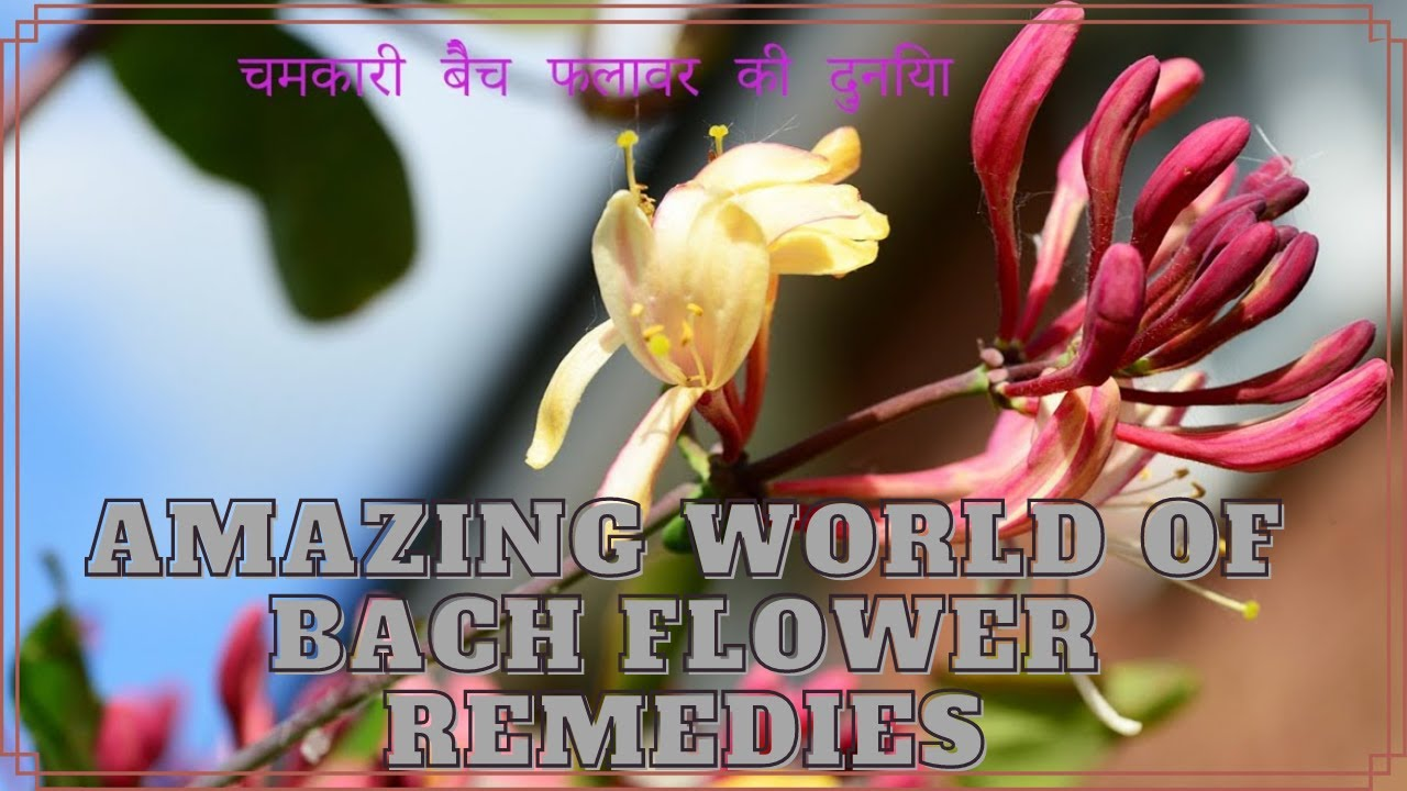 Amazing World of Bach Flower Therapy
