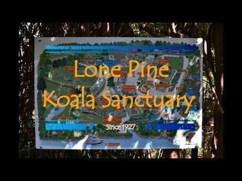 Out and About in Australia - Lone Pine Koala Sanctuary