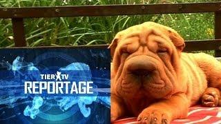 Reportage: Modehund