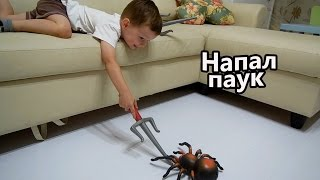 Огромный паук напал на Клима и Пилотика / Giant Spider Attacks boy
