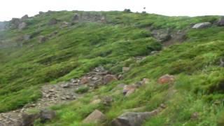 尾瀬 至仏山ハイキング 2010年7月14日