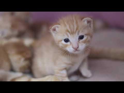 小姐姐用相機記錄5只小橘貓的成長,壹天變壹個樣,天天被萌醒!