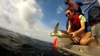 Coast Guard helps SEA TURTLES swim free off Mississippi
