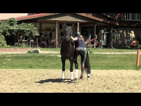 German Horse Forum 2015 Trailer