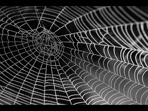 Ночной подгон. Разговор подписчиков с Маргиналом через Дискорд (18.10.2019)