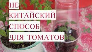 Не Китайский Способ Выращивания Рассады Томатов.(Томаты - моя любимая культуры. Рассада томатов - одна из мои любимых тем. Тема этого видео - способ выращиван..., 2017-02-22T19:22:22.000Z)