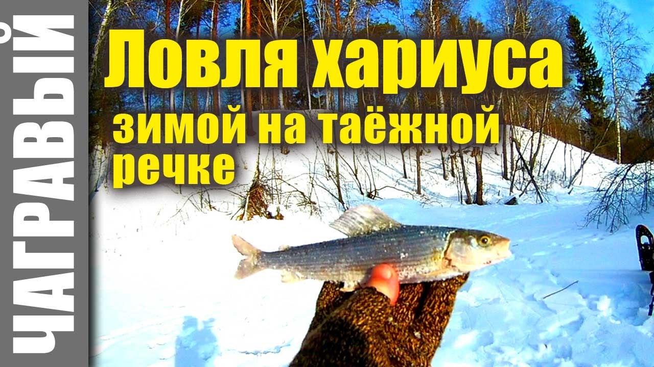 таежная рыбалка на хариуса