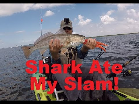 Snook Vs Shark, Kayak Fishing For Snook, Redfish, And Trout On Pine Island Sound.