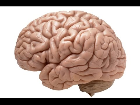 Gehirn Doku