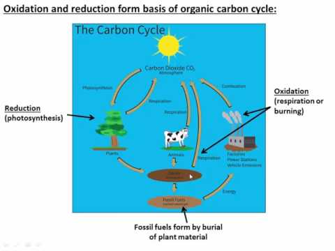 Hydrocarbons and the Carbon Cycle (C14 - V1)
