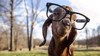 Подборка # 1! Смешные животные!  СМЕШНЫЕ видео про домашних питомцев