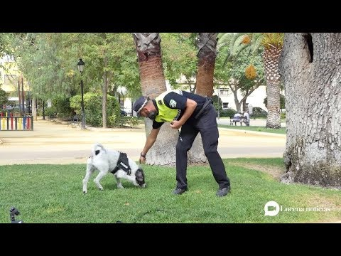 VÍDEO: La Unidad Canina de la Policía Local asumirá nuevas funciones. Te mostramos a Pirri en acción